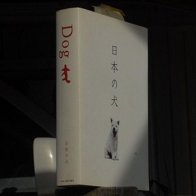 いぬー1 - コピー.JPG