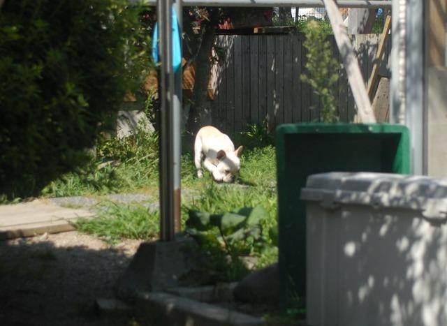 dcadbfc1-犬舎の様子2.jpg